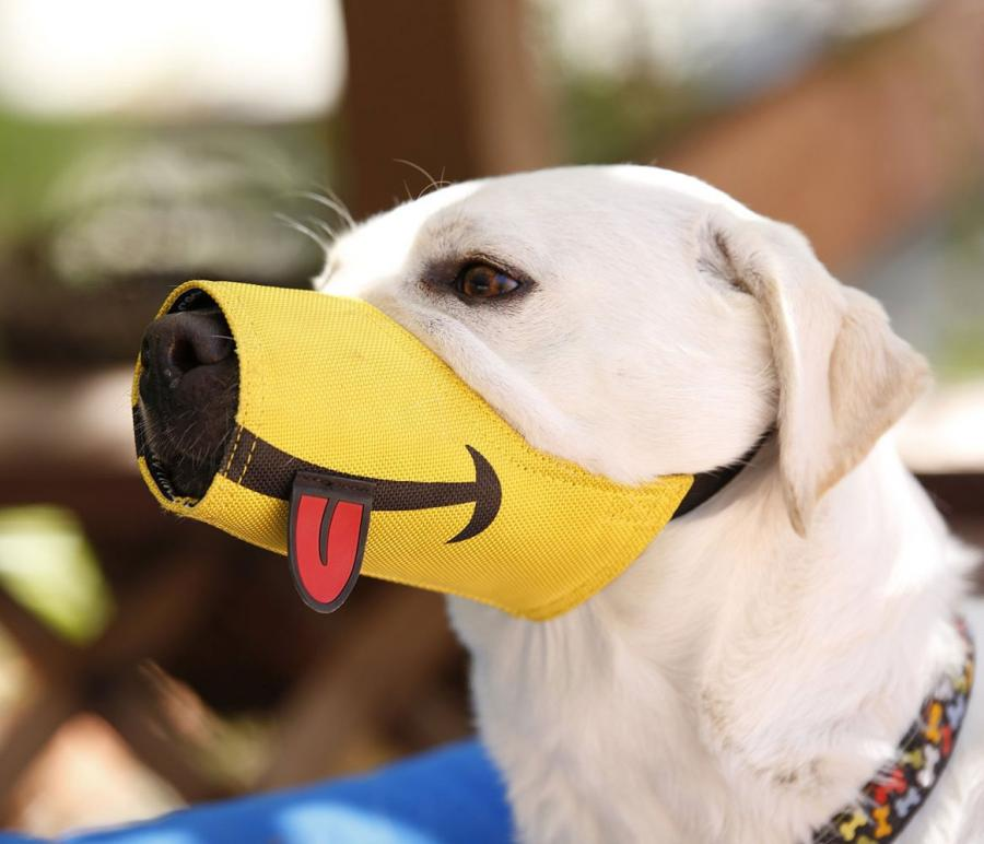dog with muzzle on